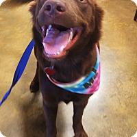 Adopt A Pet :: Piper - Waggaman, LA