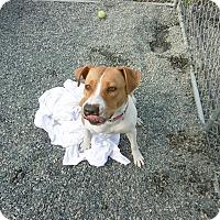 Adopt A Pet :: Nikki - Barco, NC