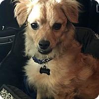 Adopt A Pet :: Tanner - Rockville, MD