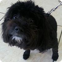 Adopt A Pet :: Darla (bonded with Doodle Bug) - Lexington, KY