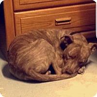 Adopt A Pet :: Ryder - Union Grove, WI
