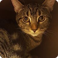 Adopt A Pet :: Wiola - Grayslake, IL