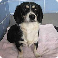 Adopt A Pet :: *BENSON - Norco, CA