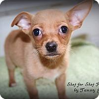 Adopt A Pet :: Rosie - Lodi, CA