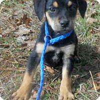 Adopt A Pet :: Agnes - Allentown, NJ