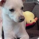 Adopt A Pet :: Precious
