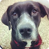 Adopt A Pet :: Butter - Sarasota, FL