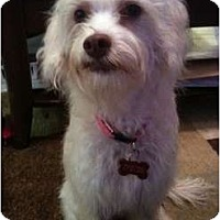 Adopt A Pet :: Maggie - Arlington, TX