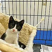 Adopt A Pet :: Loganberry - Piscataway, NJ