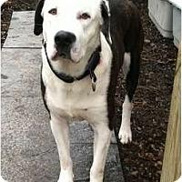 Adopt A Pet :: HANDSOME - Dennis, MA