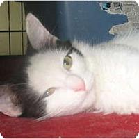 Adopt A Pet :: Sarah - Acme, PA