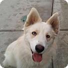 Adopt A Pet :: Shiya