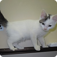 Adopt A Pet :: Bailey - Medina, OH