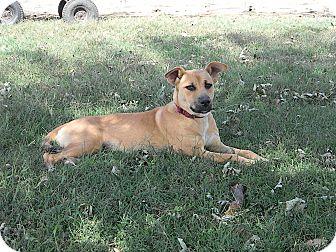 German Shepherd Dog Mix Dog for adoption in Okmulgee, Oklahoma - Zoe