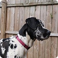 Adopt A Pet :: Delilah - Baden, PA