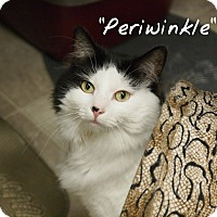 Adopt A Pet :: Periwinkle - Ocean City, NJ