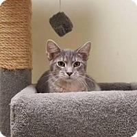 Adopt A Pet :: Wolfie - Balto, MD