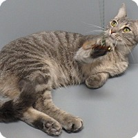 Adopt A Pet :: Darla - Seguin, TX