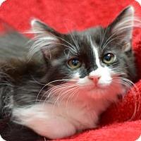 Adopt A Pet :: OC160862 - Atlanta, GA