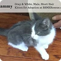 Adopt A Pet :: Sammy - Temecula, CA
