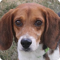 Adopt A Pet :: Olaf - North Olmsted, OH