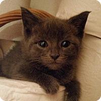 Adopt A Pet :: Tejay - Sparta, NJ