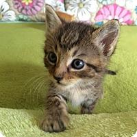 Adopt A Pet :: Landry - Garland, TX