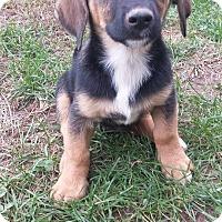Adopt A Pet :: Hampton - WESTMINSTER, MD