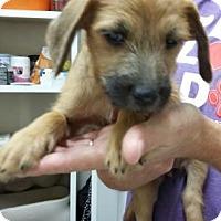 Adopt A Pet :: Brandi - Centerville, GA