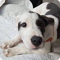 Adopt A Pet :: Envy - Savannah, GA