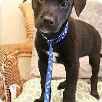 Adopt A Pet :: Ruby - Bedminster, NJ