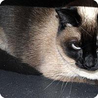 Adopt A Pet :: Cosette - Richmond, VA