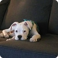 Adopt A Pet :: Lex - sylmar, CA