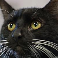 Adopt A Pet :: MAGIA - Houston, TX