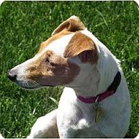 Adopt A Pet :: JACKIE - Scottsdale, AZ