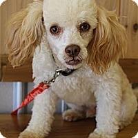Adopt A Pet :: Gilbert - Wytheville, VA