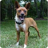 Adopt A Pet :: Zoot - Mocksville, NC