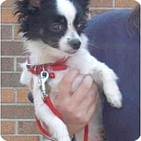 Adopt A Pet :: Harley - Pembroke Pines, FL