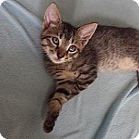 Adopt A Pet :: Magellan - Clermont, FL