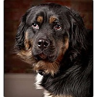 Adopt A Pet :: Max - Owensboro, KY