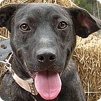 Adopt A Pet :: Mattea - Parsippany, NJ