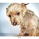 Adopt A Pet :: Penelope