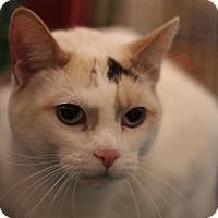 Adopt A Pet :: Amelia - Sacramento, CA