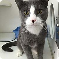 Adopt A Pet :: Finn - Merrifield, VA