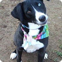 Adopt A Pet :: Daisy - in Maine - kennebunkport, ME