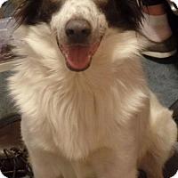 Adopt A Pet :: Harvey - Highland, IL