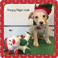 Adopt A Pet :: Hungry Hippo - Harmony, Glocester, RI