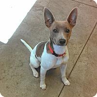 Adopt A Pet :: Prince - Larned, KS