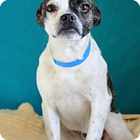 Adopt A Pet :: Archie - Waldorf, MD