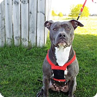 Adopt A Pet :: Gabby - Shelby, MI